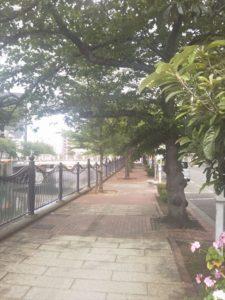 大岡川画像